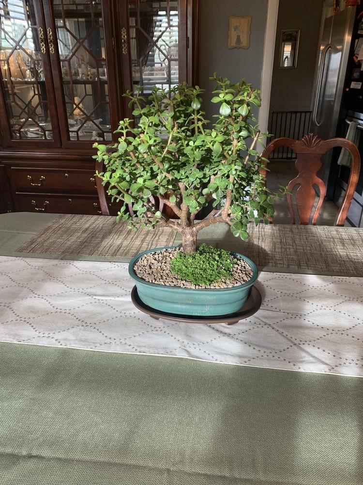 Bonsai Nursery 22 Photos 34 Reviews Nurseries Gardening 3750 S Federal Blvd Englewood Co Phone Number Yelp