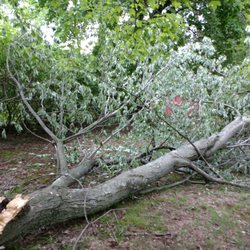 Tree Services In Netcong Yelp