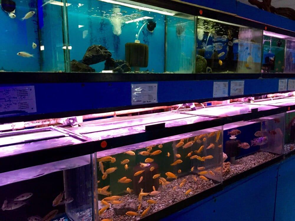 House Of Tropicals 154 Photos 90 Reviews Aquariums 7389 Baltimore Annapolis Blvd Glen Burnie Md Phone Number Yelp