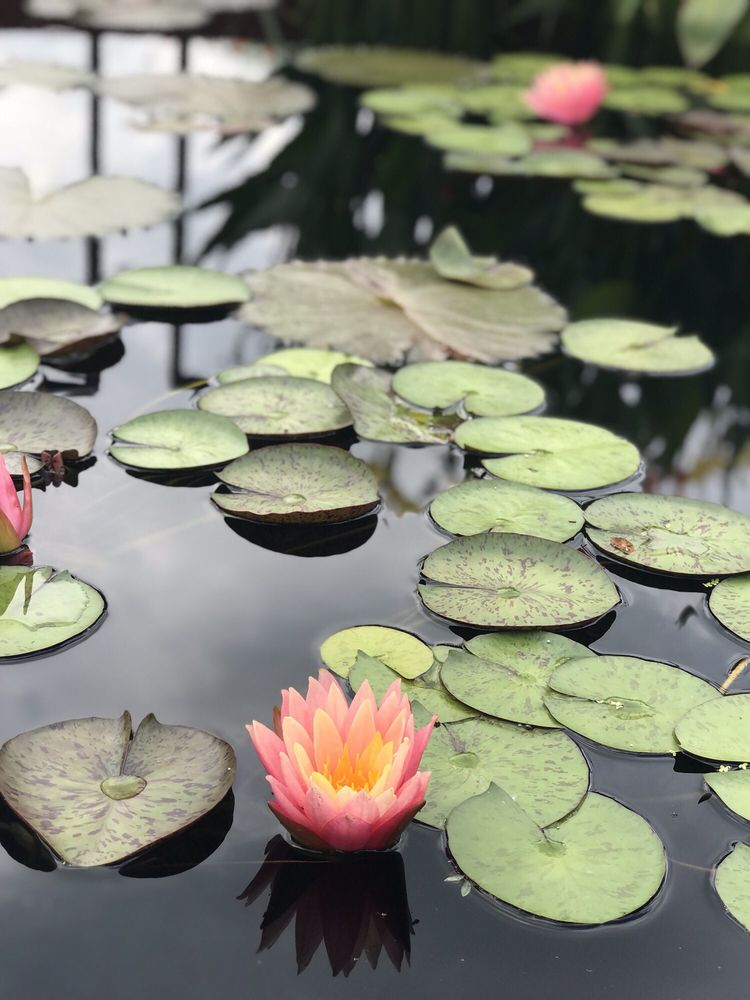 Photo of Chicago Botanic Garden - Glencoe, IL, United States. Love the botanic gardens!
