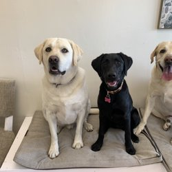 Best Large Dog Groomers Near Me August 2020 Find Nearby Large Dog Groomers Reviews Yelp