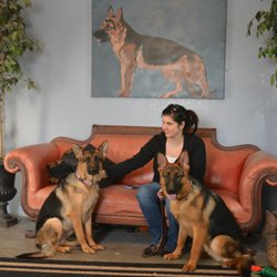 Elite German Shepherds - 2019 All You Need to Know BEFORE