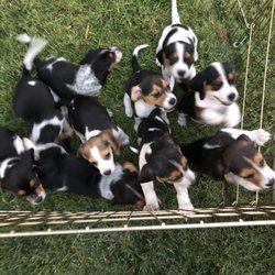 Savage Beagle Kennel 2019 All You
