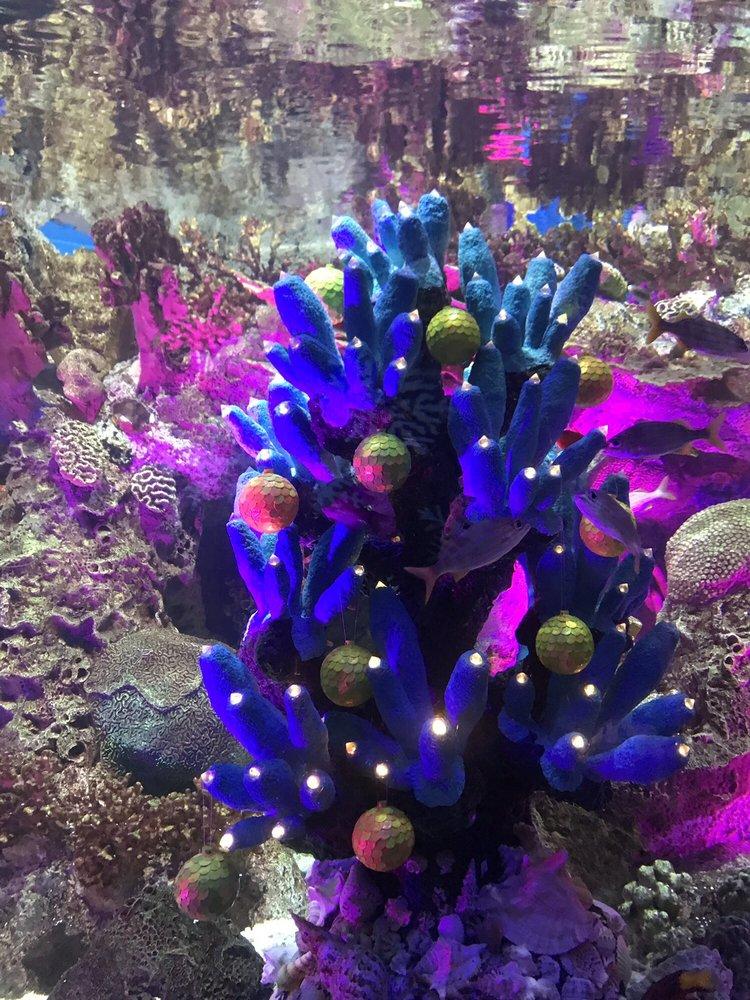 Adventure Aquarium - 1329 Photos & 460