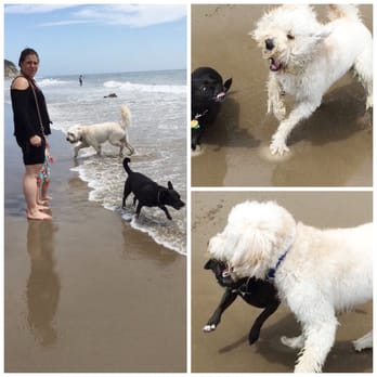 Photo of Arroyo Burro Beach - Santa Barbara, CA, United States. BEWARE OF THIS WOMAN AND HER DOG ON THE BEACH. (the black dog) HER DOG ATTACKS OTHER DOGS.