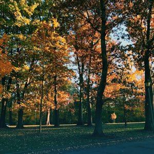 Burnet Woods on Yelp