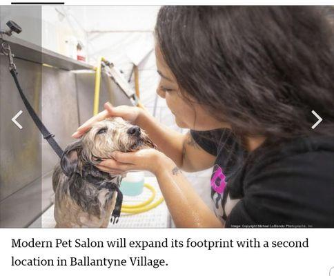Modern Pet Salon 13643 Providence Rd Matthews Nc Pet Grooming Mapquest