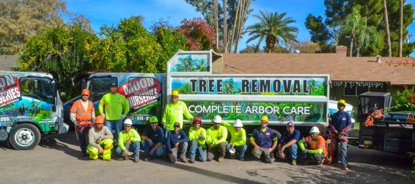 Tree Removal 14025 N 7th St Phoenix Az