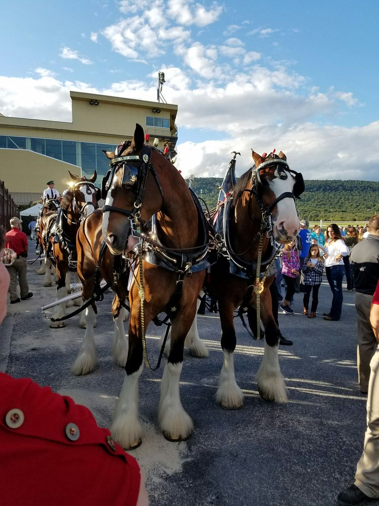 Clydesdale horses hollywood casino casino coushatta grand