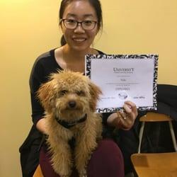 Best Puppy Obedience Classes Near Me July 2019 Find