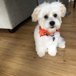 Best Dog Nail Trimming Near Me January 2020 Find Nearby