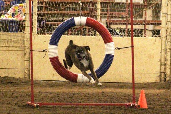 Acoma Training Center 333 Wyoming Blvd Se Albuquerque Nm Pet