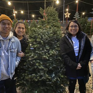 Cozzolino's Christmas Trees - Temp