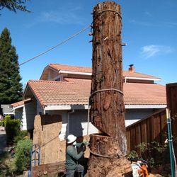 Tree Surgeons Trending News