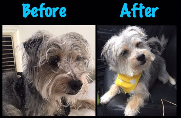 Puppy Love Pet Spa 272 Photos 275 Reviews Pet Groomers 1608 Colorado Blvd Eagle Rock Los Angeles Ca Phone Number Yelp