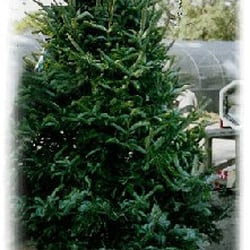 Ergle Christmas Tree Farm.Ergle Christmas Tree Farm Christmas Trees 3325 Treiman