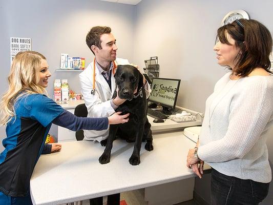 SPADINA ANIMAL HOSPITAL - 18 Photos & 37 Reviews - Veterinarians - 125  Spadina Avenue, Toronto, ON - Phone Number