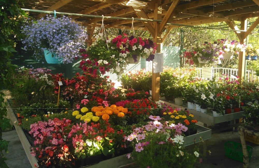 La Jardinerie De Pessicart Nurseries Gardening 173 Bis