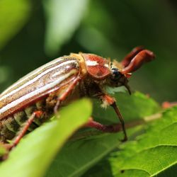 Pest Control In Portland Yelp