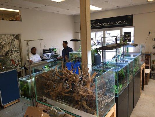 Aquascapes 1150 N Nimitz Hwy Honolulu Hi Pet Shops Mapquest