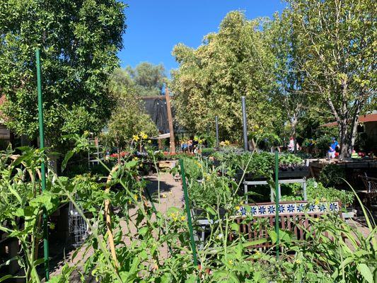 Whitfill Nurseries Inc 824 E Glendale Ave Phoenix Az Garden