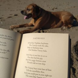 Photo of Plumb Beach - Brooklyn, NY, United States. Lazybones is the term and poem.. Maine Ballads..