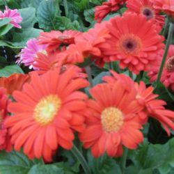 Merveilleux Photo Of Frank Otte Nursery U0026 Garden Center   Louisville, KY, United States