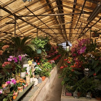 Campbell S Greenhouses Updated Covid
