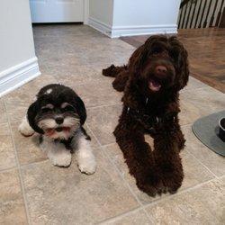 Carolines Dog Training Ottawa Request A Quote 40 Photos