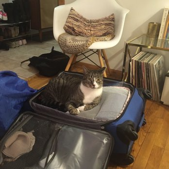 Brooklyn Cat Sitting 66 Reviews Pet Sitting Greenpoint Brooklyn Ny Phone Number Yelp
