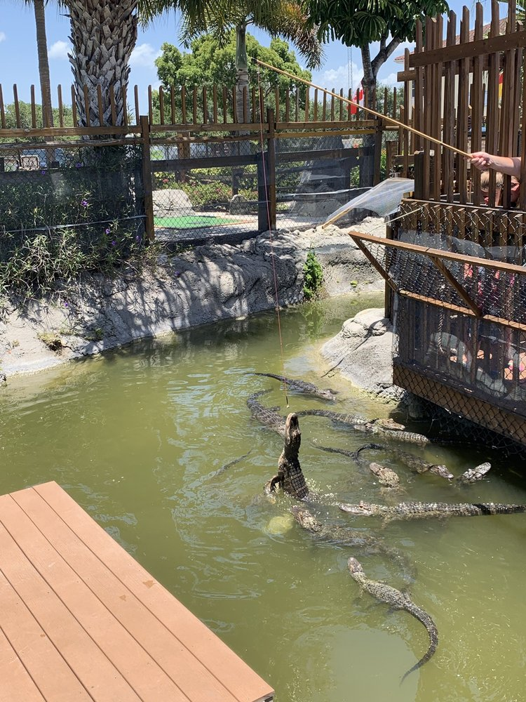 Photo of Smugglers Cove Adventure Golf - Bradenton, FL, United States. Feeding the gators!