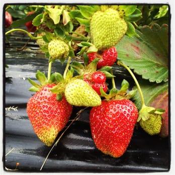 Southern Comfort Berry Farm Farmers Market 37450 Bushwood Wharf Rd Bushwood Md Phone Number Yelp