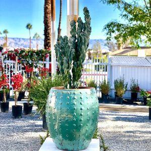 Palo Verde Gardens 47 Photos