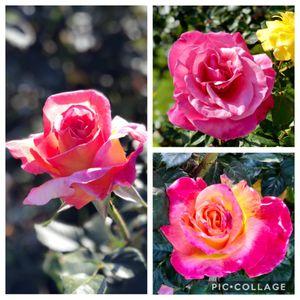 Exposition Park Rose Garden on Yelp