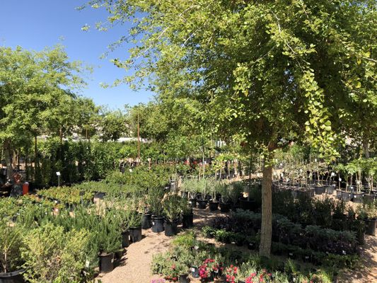 Arcadia Color Garden 1828 N 52nd St Phoenix Az Nurseries