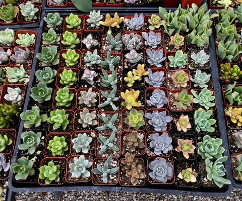 Martinez Nursery 8734 La Palma Ave