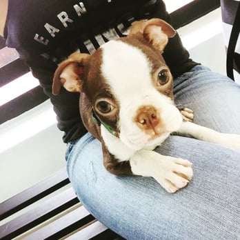 Photo of Panda Animal Clinic - Hialeah, FL, United States. Kion the Boston Terrier
