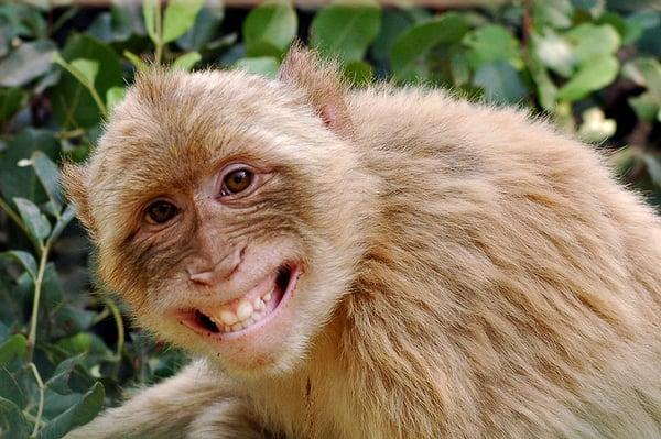 Monkeygirl A.