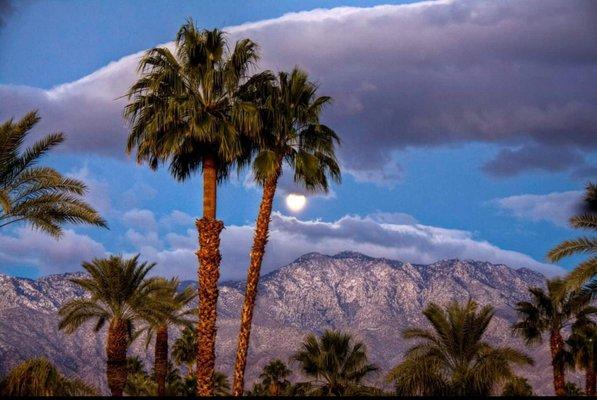 Palm Springs Diva A.