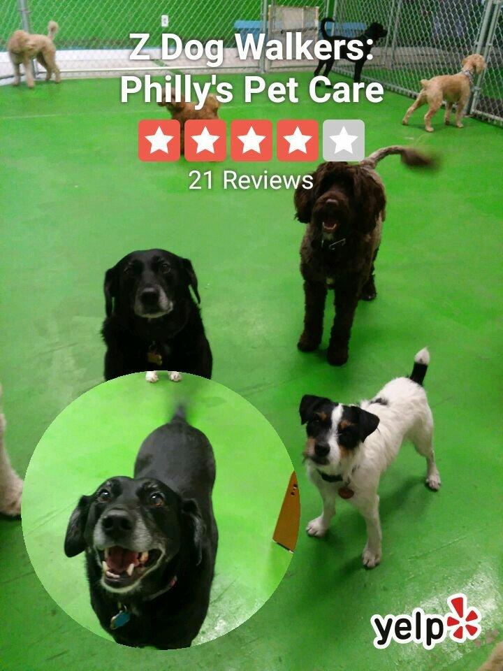 "Doggie Day Care Street Signe Pet Dog Sitter Animal CareIndoor//Outdoor36/"""